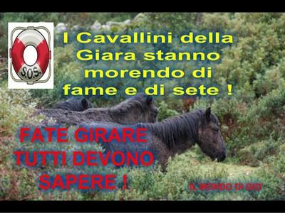 cavallini_giara2.jpg