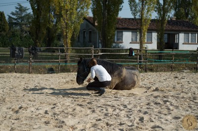 HorseMira1.jpg