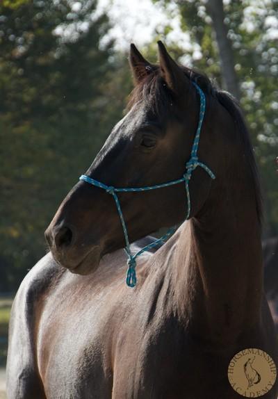 HorseMira2.jpg