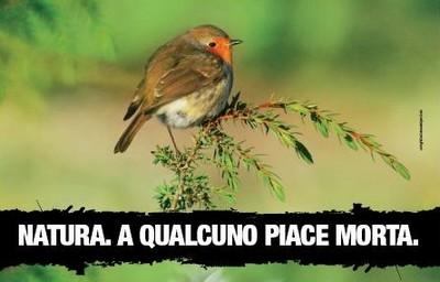 lipuCaccia