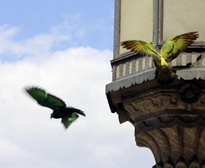 piccioni_colorati1.jpg