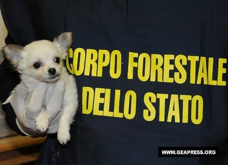 Uno dei cuccioli sequestrati