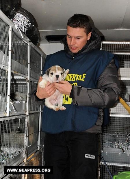 Un altro cucciolo sequestrato