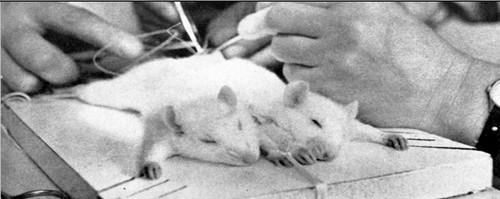 vivisezione_500