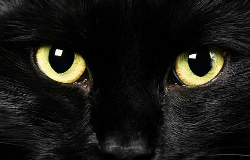 Gli occhi di Giovanna