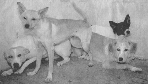 Alcuni dei cani di Noha