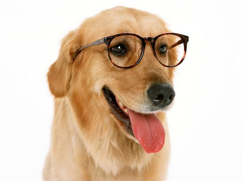 Animals_Dogs_Wearing_glasses_Dog_005508_