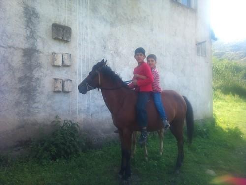 cavalli_armenia2