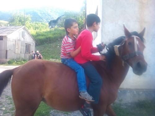 cavalli_armenia3