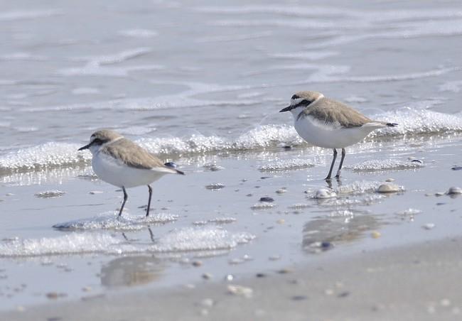 Fratini in spiaggia