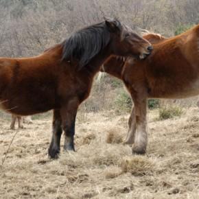 Cavalli di Pietralata