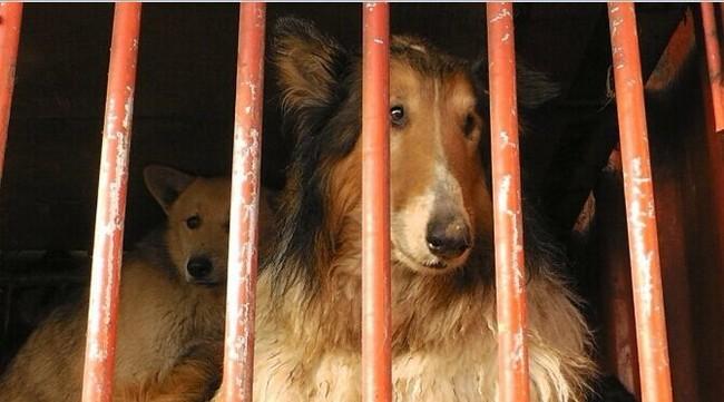 Cani in attesa di morire