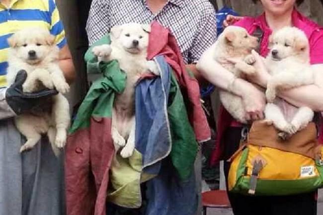Quattro cuccioli salvati a Yulin (foto di Humane Society International)