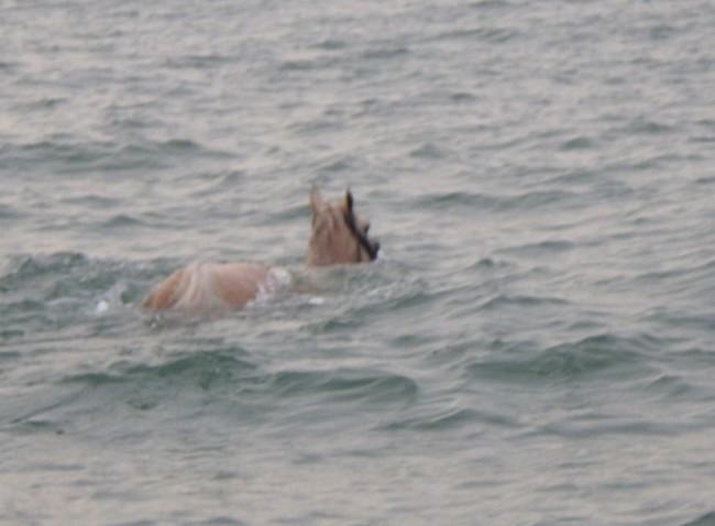Il cavallo in mare