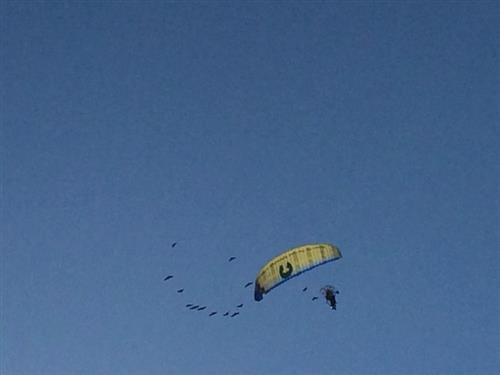 Ibis nel cielo del Lido di Venezia