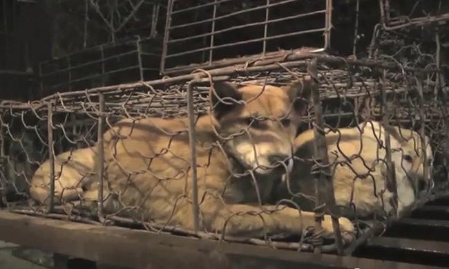 Cane in Cina