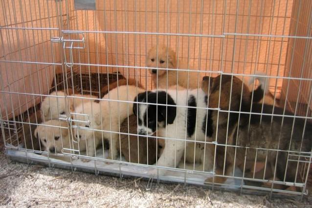 14-cuccioli-salvati-large1-638x425