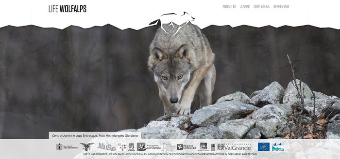 Life-WolfAlp