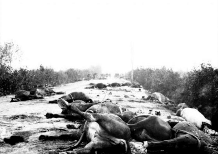 Cavalli morti dopo Caporetto