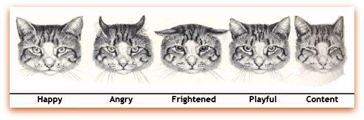 Cat-Facial-Expression