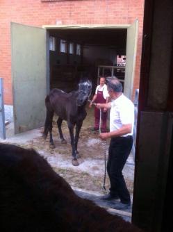 il cavallo salvato