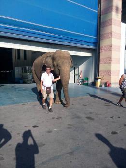 elefante a viareggio