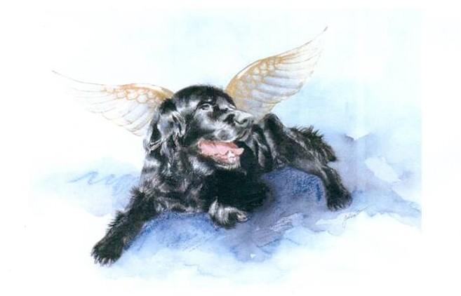 angeli animali