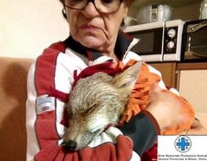 La volpe salvata