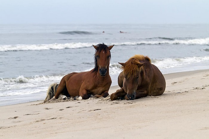 Wild-Horses-of-Assateague-Island-Edward-Kreis
