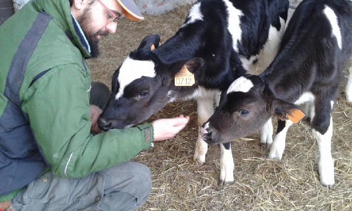 fattoria capre e cavoli