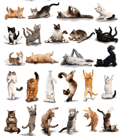 gatti pilates
