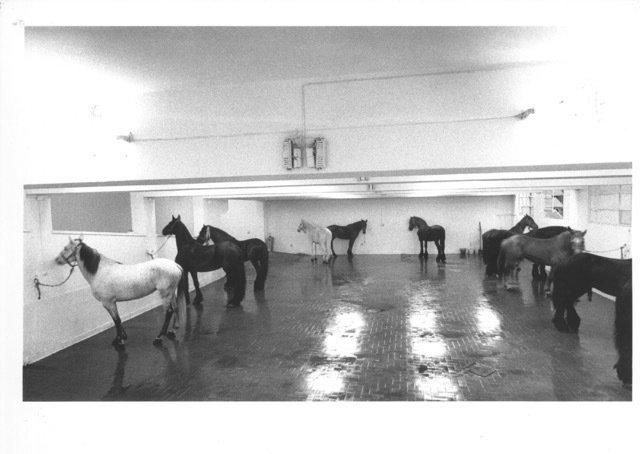 untitled_1969_12_horses-1600-xxx_q85