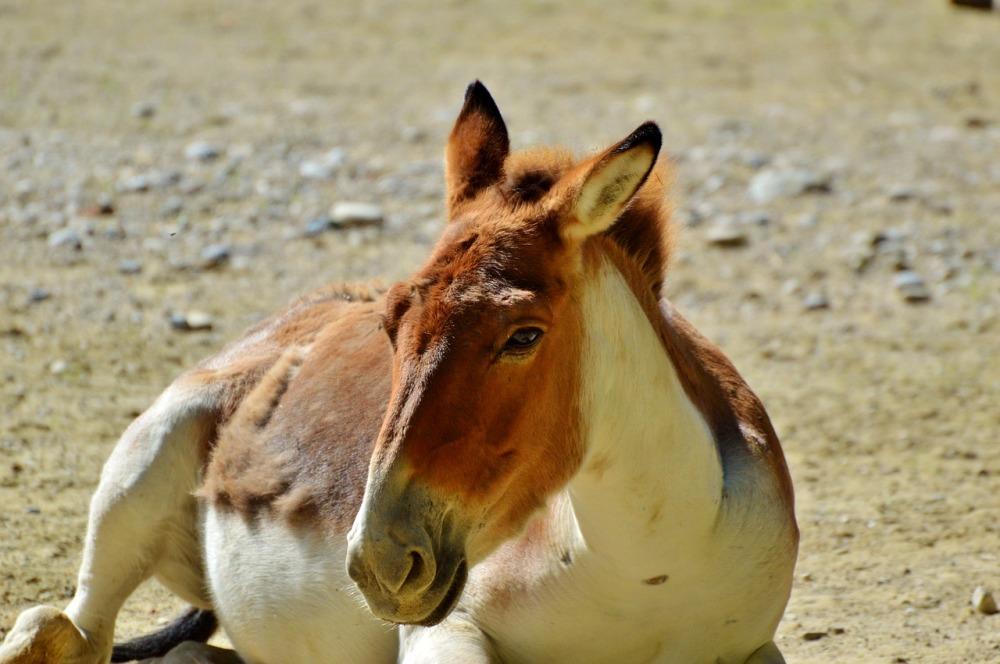 donkey-2518552_1280.jpg