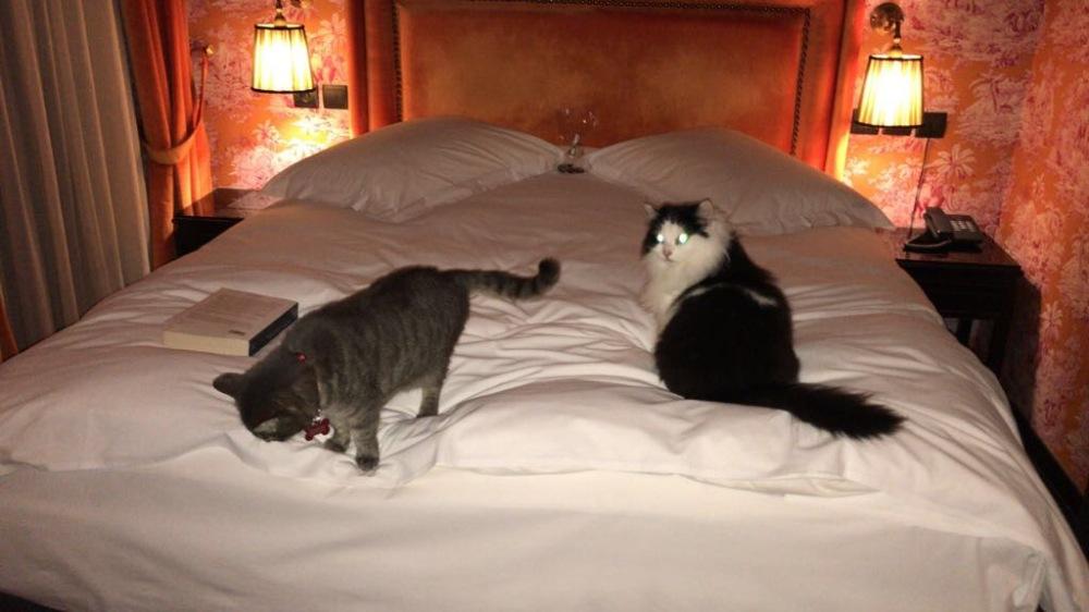 Kiki e Olga si sono subito sistemate sul lettone