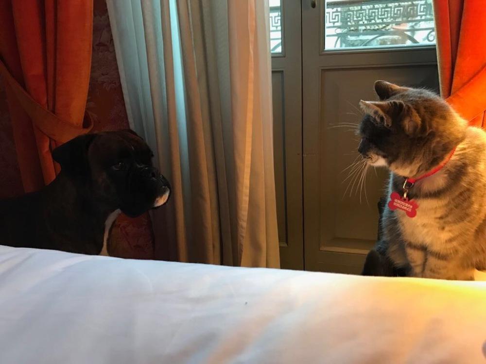 Io e Kiki in hotel a Patrasso
