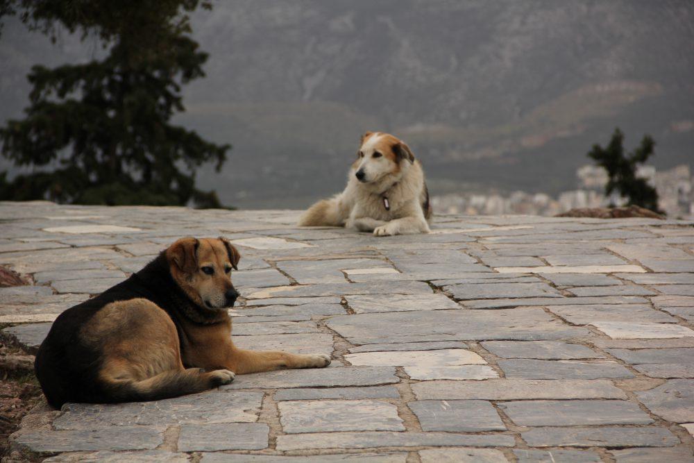 Cani randagi ad Atene