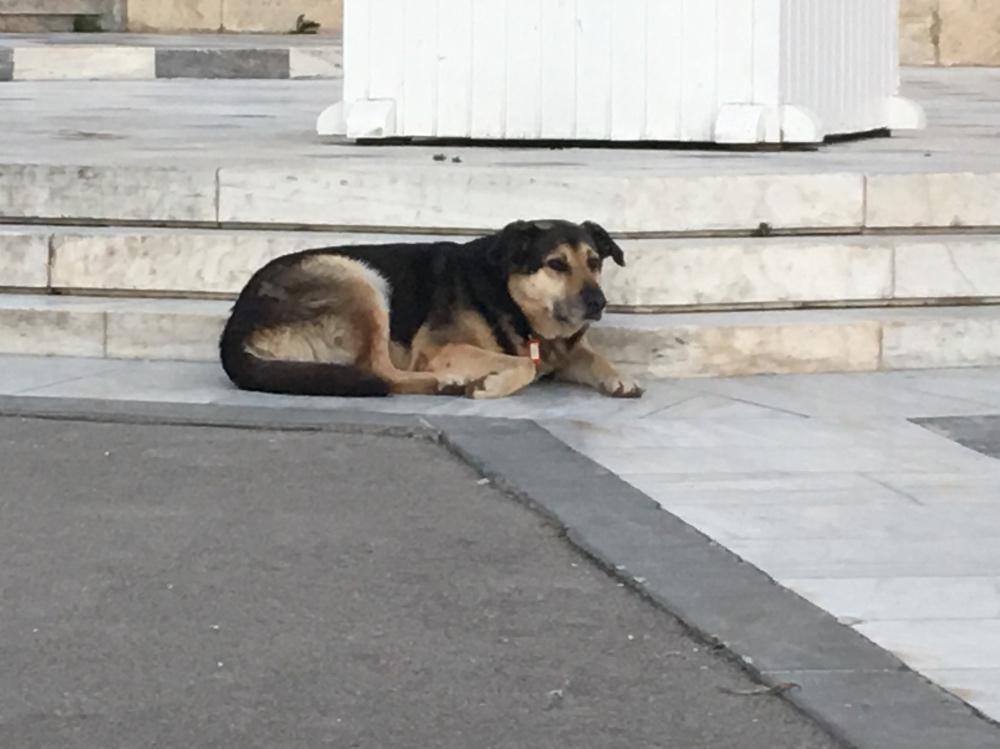 """Un randagio """"censito"""" ad Atene"""