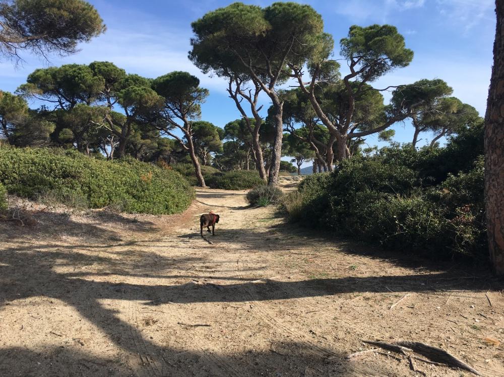 Nella pineta del Parco naturale di Schinia, est di Atene