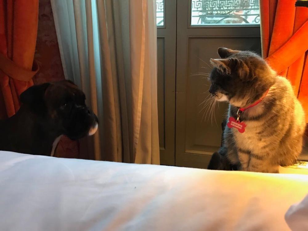 Kiki e Vanda in hotel